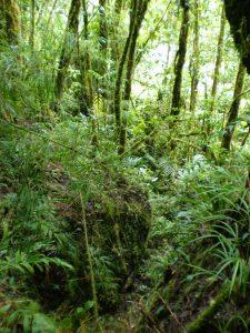 Bosque tropical húmedo en Monteverde, Costa Rica