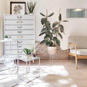 Muebles y plantas