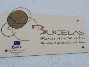 Ruta de vinos Bucelas
