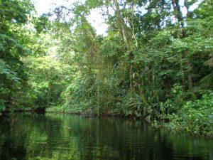 Manglares de Costa Rica