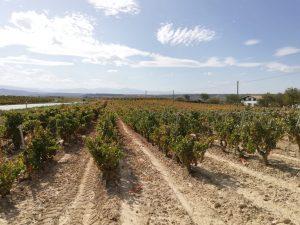 Naturaleza y entorno del vino