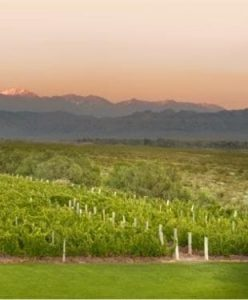 Finca de viñedos en Mendoza